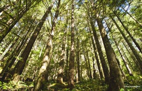 Grove of trees in Opal Creek Wilderness